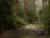 Photograph by Simon Roberts showing a dirt path through a wood on an overcast day with patches of light and shade