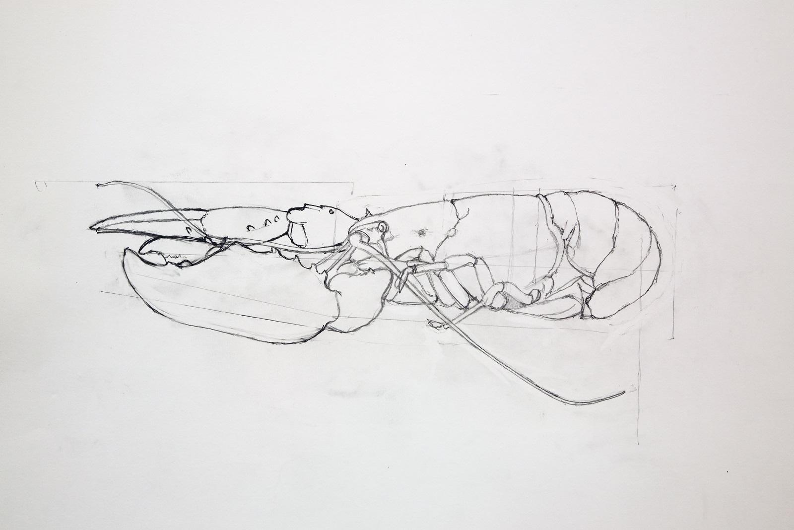 Pencil sketch of a lobster