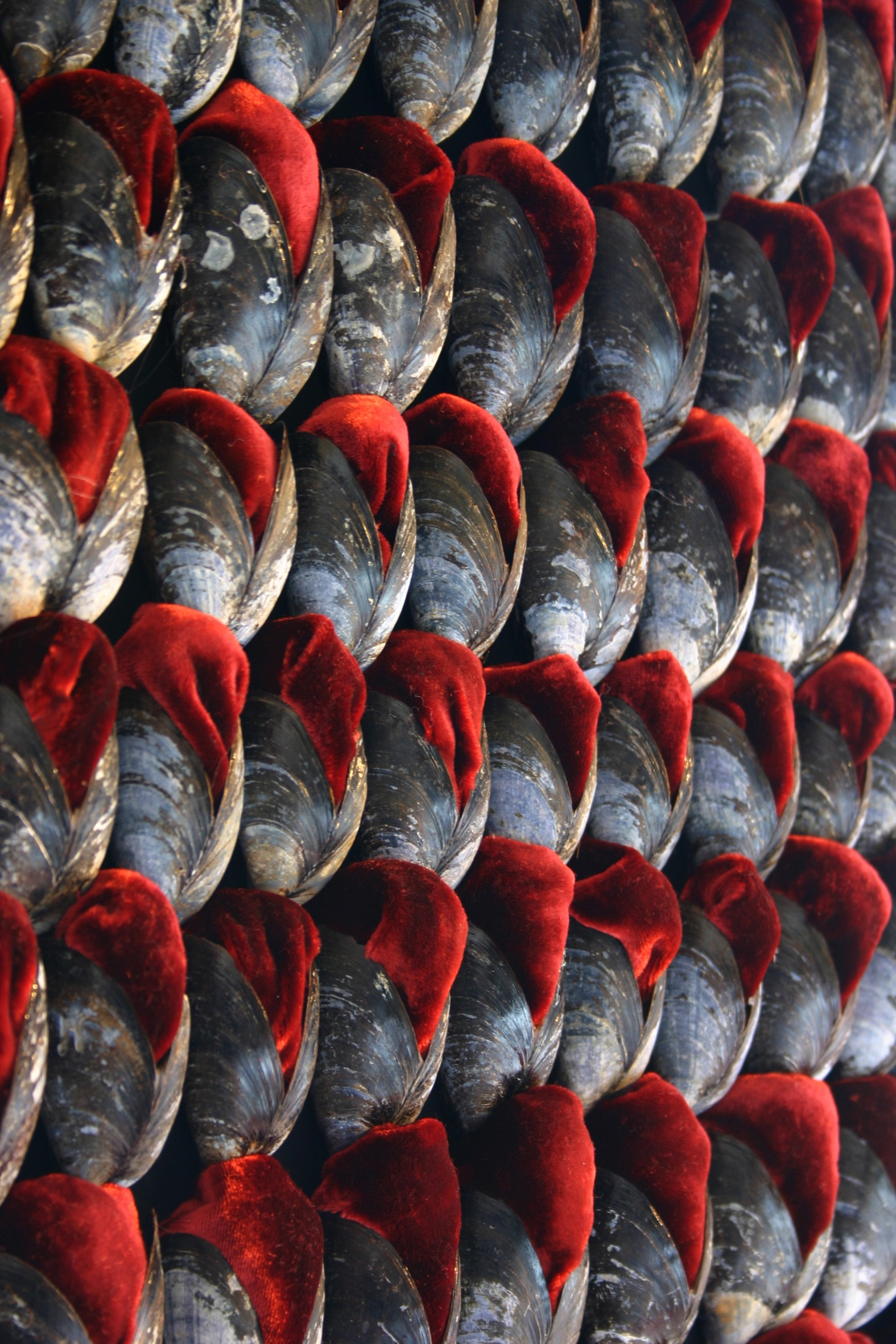 A close up of dozens of mussel shells stuffed with red velvet.